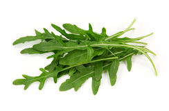 Eruca sativa Stock Image