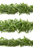 Eruca sativa rucola rocket salad Stock Photos