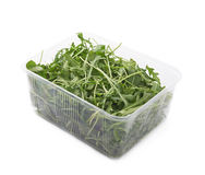 Eruca sativa rucola rocket salad Royalty Free Stock Photo