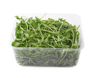 Eruca sativa rucola rocket salad Royalty Free Stock Images