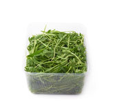 Eruca sativa rucola rocket salad Stock Photography