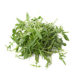 Eruca sativa rucola rocket salad Royalty Free Stock Image