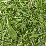 Eruca sativa rucola rocket salad Stock Photo