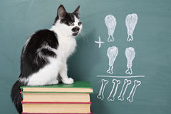 Erudite cat. School idea, joke about a educated cat studying arithmetic Stock Photography