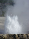 Erupting Geyser Royalty Free Stock Images