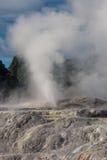Erupting geyser in Rotorua Royalty Free Stock Photo