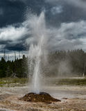Erupting geyser in Yellowstone National Park. Royalty Free Stock Photo