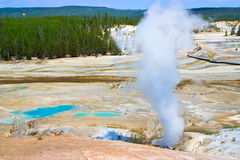 Erupting geyser, Yellowstone, Wyoming Stock Photography