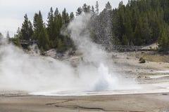 Erupting Geysir in Yellowstone Stock Images