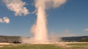 Eruption of Old Faithful Geyser. Yellowstone National Park, Wyoming, USA royalty free stock image