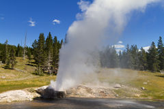 Eruption of Riverside Geyser. Yellowstone National Park, Wyoming, USA Stock Image