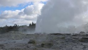 Eruption of Two geysers. Te Puia geothermal valley - Rotorua, New Zealand stock footage