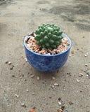 Erusama del cactus fotografia stock