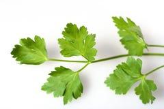 erva da salsa italiana da Liso-folha Imagem de Stock Royalty Free