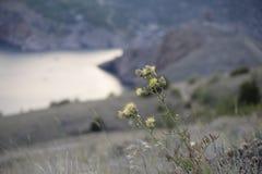 A erva daninha cresce fotografia de stock