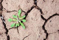 A erva daninha cresce na terra imagens de stock