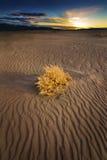 Erva daninha da queda na duna de areia no por do sol em Nevada Desert imagem de stock