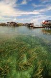 Erva daninha do mar Foto de Stock