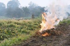Erva daninha e grama que queimam-se no campo, após a colheita, tempo do outono Poluição ambiental e emissões foto de stock royalty free