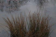 Erva daninha, fim acima da luz solar e água da grama verde no campo Imagens de Stock