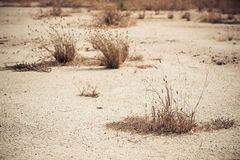Erva daninha seca na terra seca Fotos de Stock Royalty Free