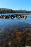 Erva daninha tasmaniana do mar, perto do Port Arthur foto de stock royalty free