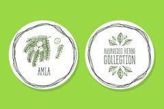 Erva de Ayurvedic - etiqueta do produto com Amla Imagem de Stock Royalty Free