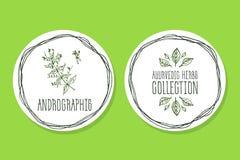 Erva de Ayurvedic - etiqueta do produto com Andrographis Fotos de Stock Royalty Free