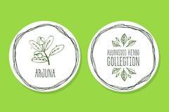 Erva de Ayurvedic - etiqueta do produto com Arjuna Imagens de Stock