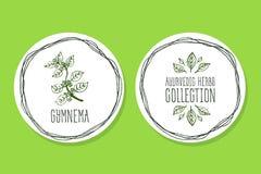 Erva de Ayurvedic - etiqueta do produto com Gymnema Silvestre Imagens de Stock