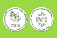 Erva de Ayurvedic - etiqueta do produto com Sambucus Imagens de Stock