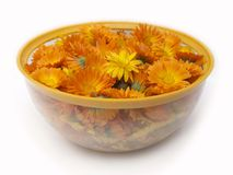 Erva do Calendula Imagem de Stock Royalty Free