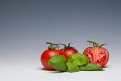 Erva do tomate e da manjericão Fotografia de Stock Royalty Free
