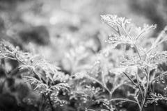A erva-doce cresce na cama imagem de stock royalty free