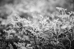 A erva-doce cresce na cama fotos de stock royalty free