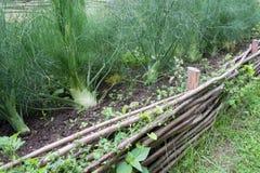 Erva-doce no jardim medieval do estilo imagens de stock royalty free