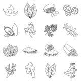 A erva e as especiarias ajustaram ícones no estilo do esboço Símbolo grande do vetor da erva e das especiarias da coleção Foto de Stock