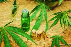 Erva e folhas do cannabis para o caldo do tratamento, tintura, extrato, óleo imagens de stock royalty free