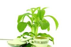 Erva e pó do Stevia Fotografia de Stock Royalty Free
