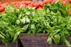 Erva fresca da manjericão no mercado Fotografia de Stock Royalty Free