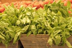 A erva fresca da manjericão no mercado desvaneceu-se Imagem de Stock Royalty Free