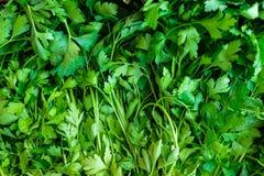 Erva verde da salsa Imagem de Stock Royalty Free