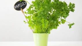 Erva verde da salsa com a placa de nome no potenciômetro na tabela filme