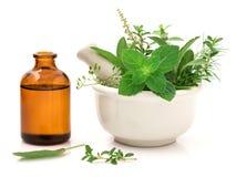 Erval fresco dos cuidados médicos alternativos e garrafa da aromaterapia Fotos de Stock Royalty Free