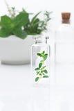 Erval fresco dos cuidados médicos alternativos e garrafa da aromaterapia Imagens de Stock Royalty Free