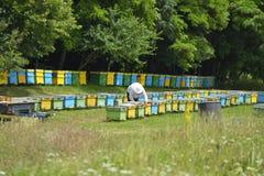 Ervaren hogere imker die in zijn bijenstal werken royalty-vrije stock afbeelding