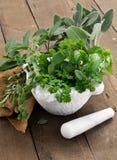 Ervas aromáticas imagens de stock