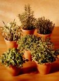 Ervas aromáticas Imagem de Stock Royalty Free