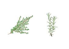 Ervas aromáticas Fotos de Stock