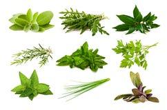 Ervas aromáticas da mistura fotografia de stock